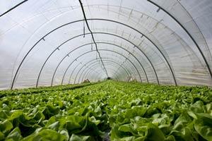 tefzel_greenhouse